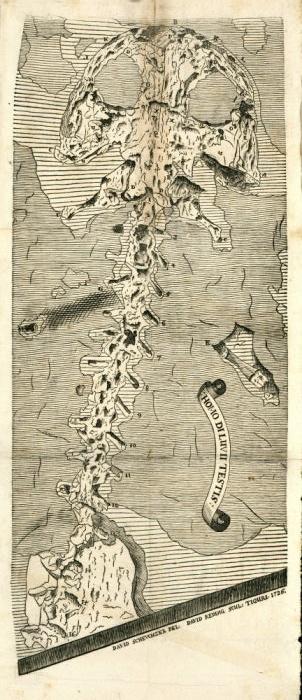 Johann Jakob Scheuchzer, Unwitting Namesake of a Giant Salamander
